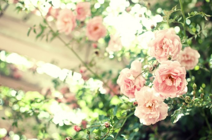 ぱくたそ 花